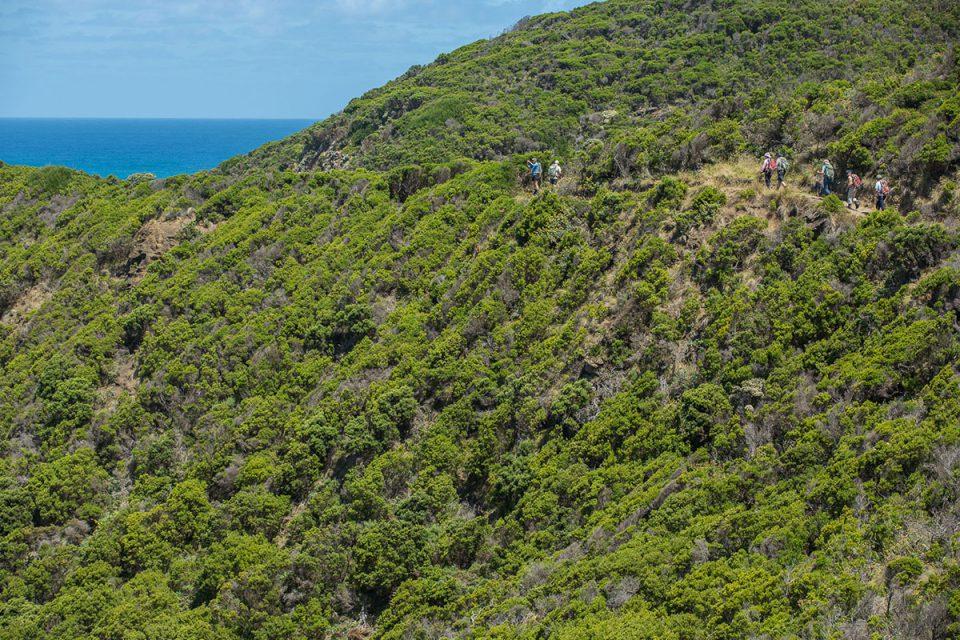 Walk along the hillside with Great Walks of Australia on the Twelve Apostles Lodge Walk in Victoria.