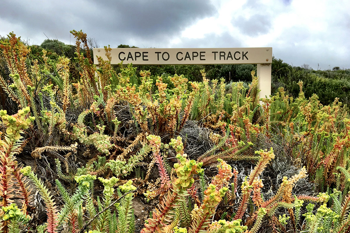 Discover diverse Australian landscapes on the Cape to Cape Track with Great Walks of Australia.