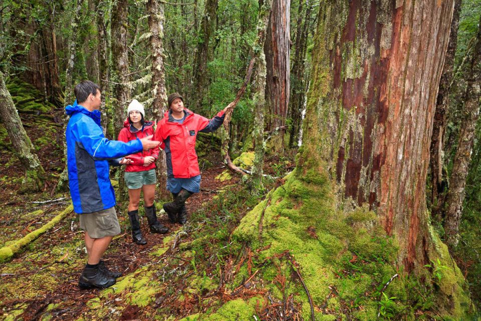 Learn from your guide along the way with Great Walks of Australia.