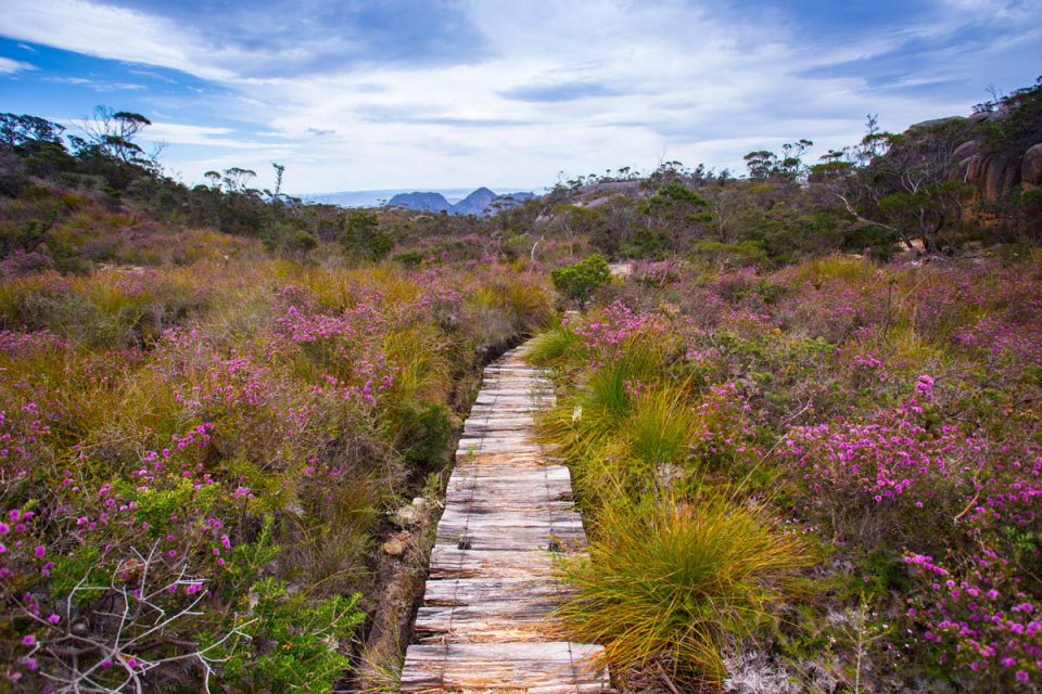 Enjoy unique Australian flora on the trails of the Freycinet Experience Walk.