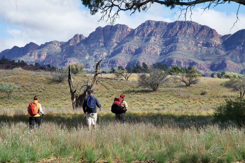 Experience diverse Australian landscapes on the Arkaba Walk in South Australia with Great Walks of Australia.