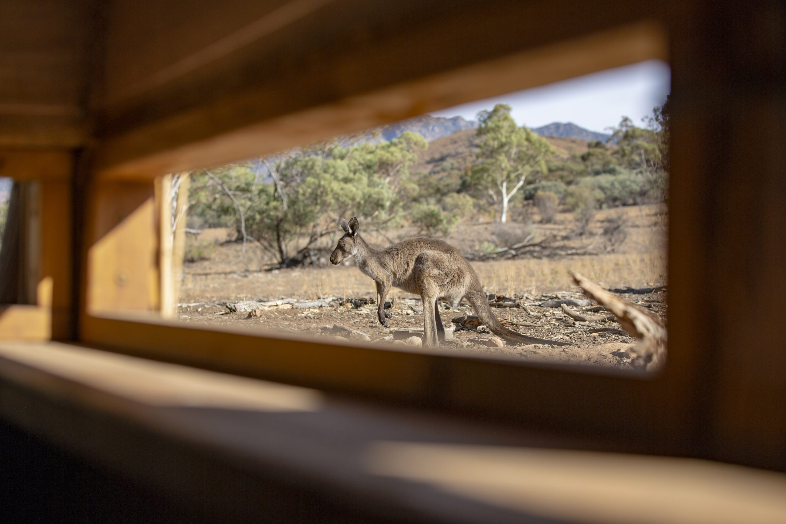 Enjoying the wildlife in the viewing hide at Arkaba