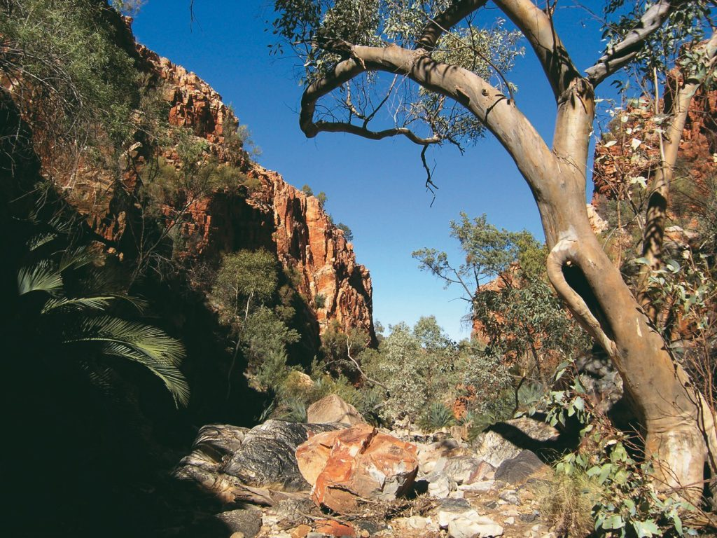 Standley Chasm Classic Larapinta Trek In Comfort